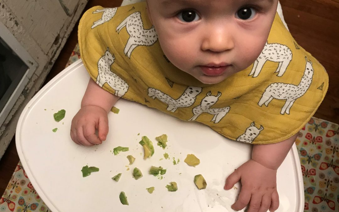 baby sitting in highchair eating avocado